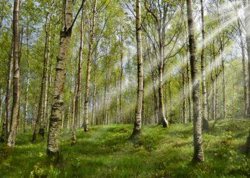 Vi ser ikke skogen for alle trærne. Vår innsender mener at vi som samfunn ikke forstår at vi diskriminerer mot nordmenn i håp om et mer tolerant samfunn.  Vi oppnår det motsatte. (Image by smellypumpy from Pixabay)